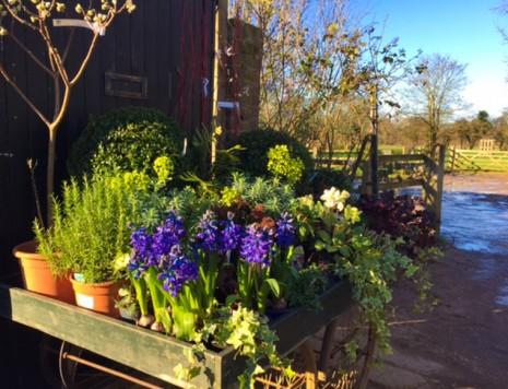 plants in wheelbarrow