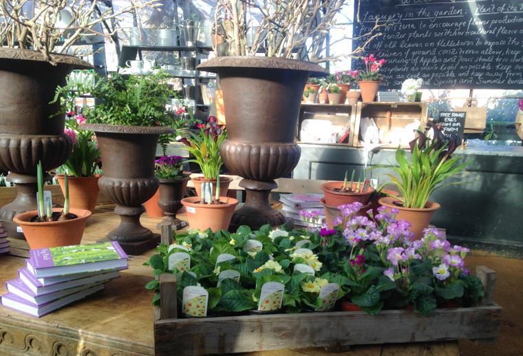 planter, plants, nursery
