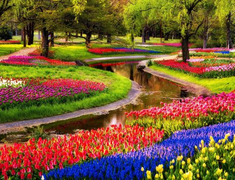 Keukenhof gardens in Holland