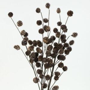 Omerica Cone Branches
