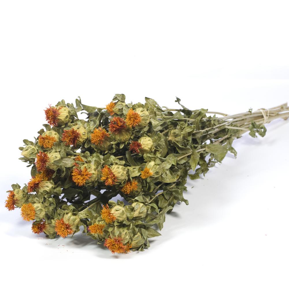 Carthamus Natural Orange Dried Bunch