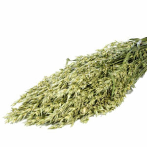Oats Grass Stems natural green bunch