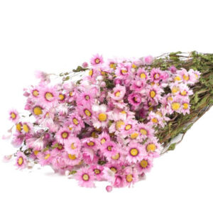 Rodanthe Natural Pink Dried Bunch