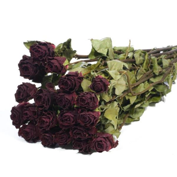 Roses Natural Dried Dark Red Bunch