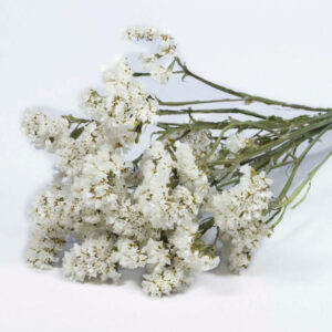Statice Sinuata Natural White Dried Bunch