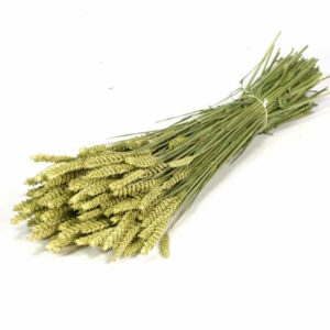 Dried Wheat Natural Grass Bunch