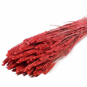Wheat stems dyed red bunch