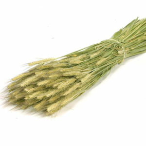 Triticale natural green bunch