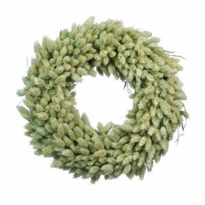 Phalaris Wreath 35cm Natural Dried