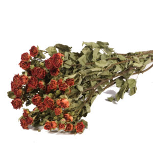 Spray Roses Natural Dried Orange Bunch