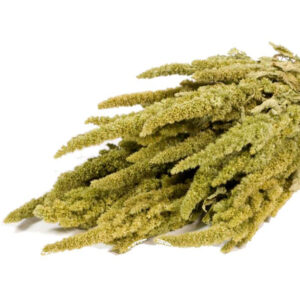 Amaranthus Dried Flower Bunch Natural Green
