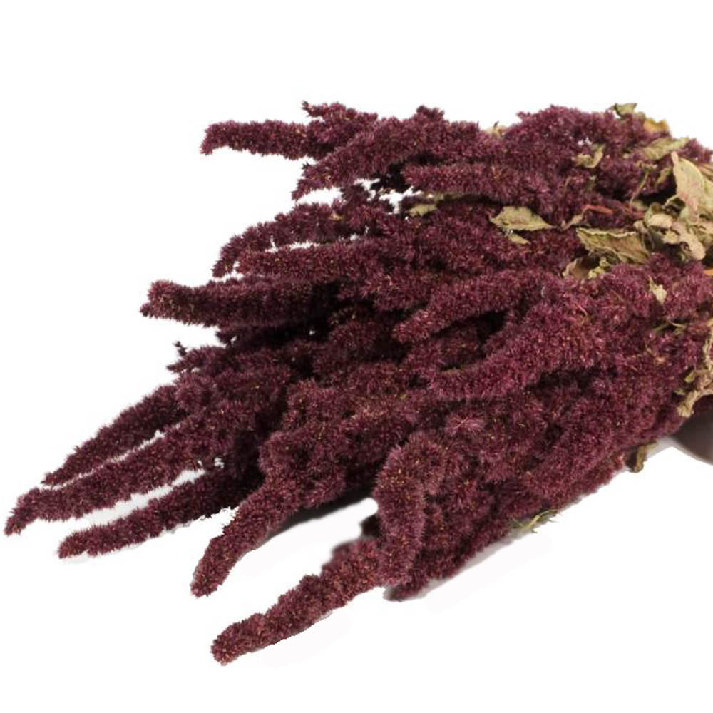 Amaranthus Dried Flower Bunch Natural Red