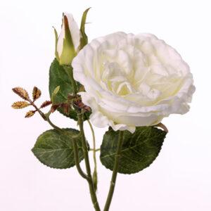 Rose White Garden Alabaster