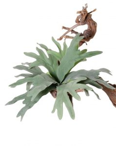 Faux Staghorn Fern, Platycerium