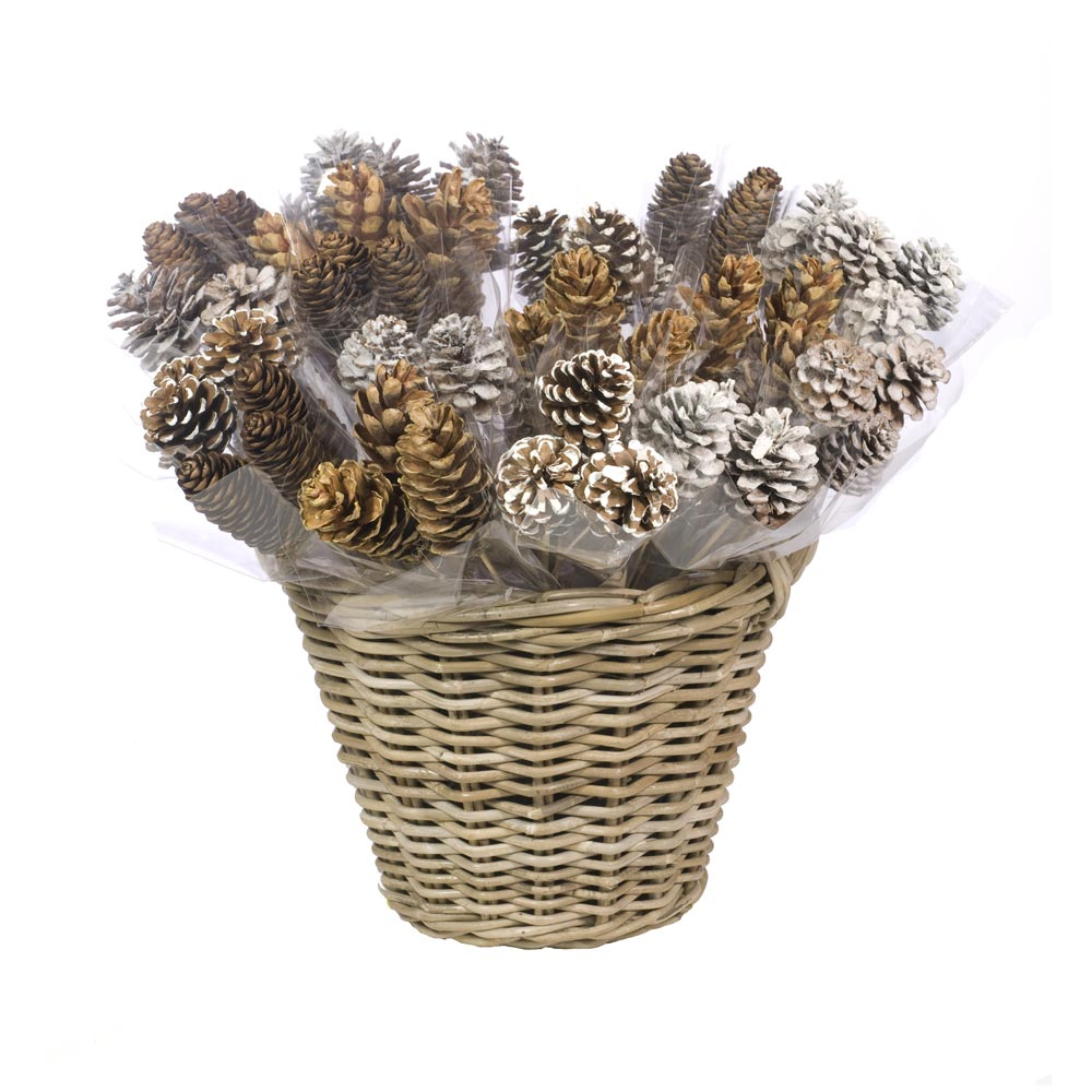 Buyers Selection Cone Bunches