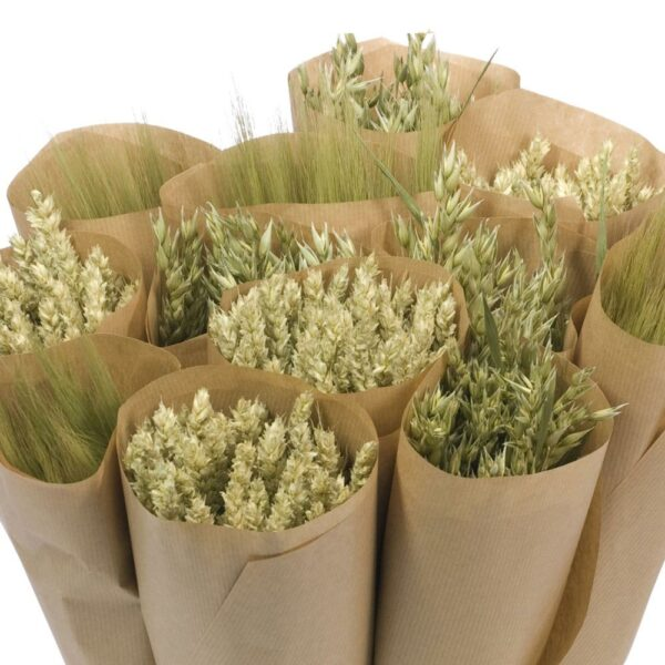 Dried Flower Straight Line Bunches