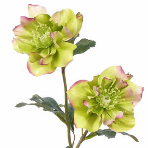 Hellebore Faux Green Double 48cm