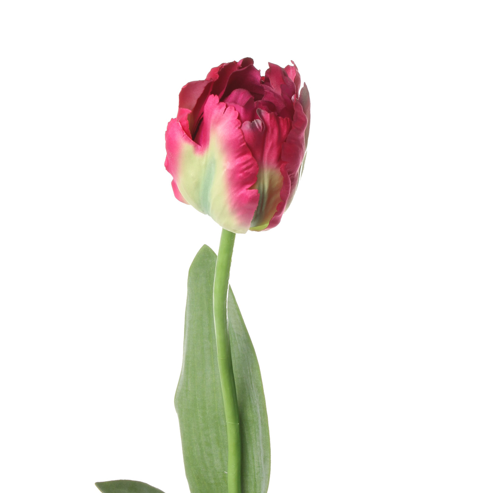 Tulip parrot cerise 62cm stems