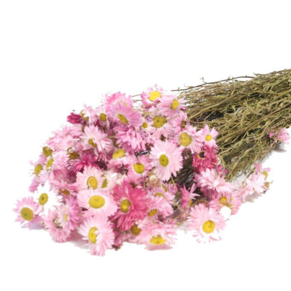 Acrolinum Natural Pink Dried Bunch