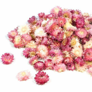Helichrysum Dried Heads, Natural Pink