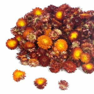 Helichrysum Dried Heads, Natural Red