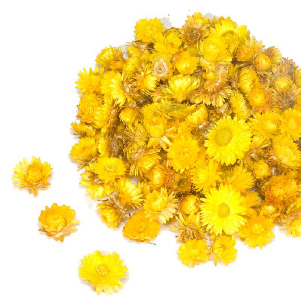 Helichrysum Dried Heads, Natural Yellow