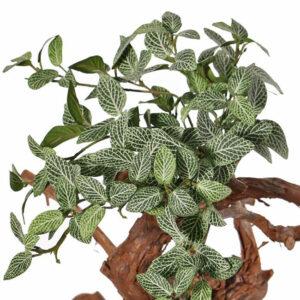 Fittonia Bush Faux, Plant 25cm