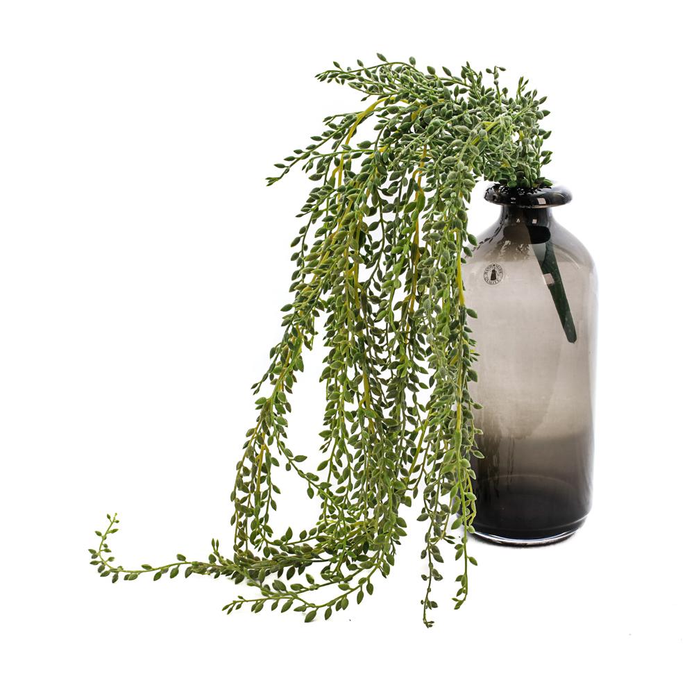 Senecio radicans Faux, 85cm Plant