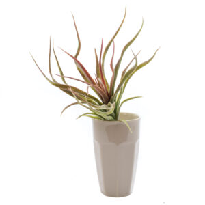Red and Green Tillandsia Faux, Flocked 25 cm Plant,