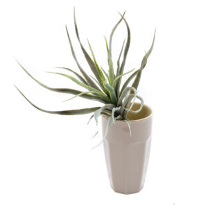 Green and Silver Tillandsia Faux Plant, Flocked 25 cm