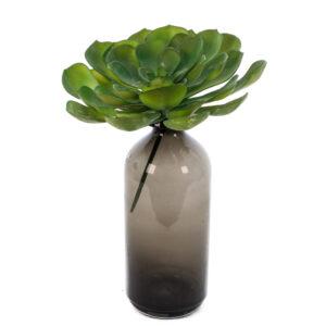 Aeonium arboreum Faux XL, 24cm Tall Plant