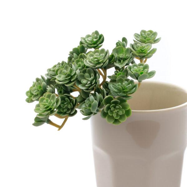 Echeveria Faux Mini Bush, Green, 19cm Plant