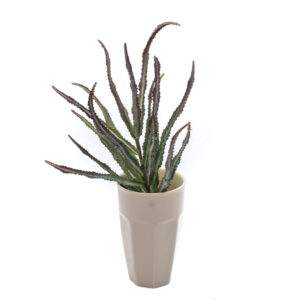 Haworthia Bush Faux, Red and Green, 32cm plant