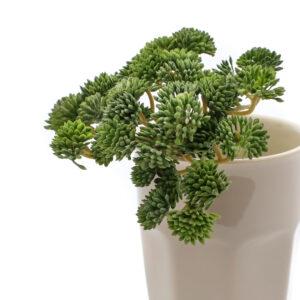 Sedum Faux Plant, Green, 19cm