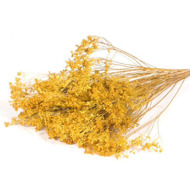 Broom Bloom Yellow Dried