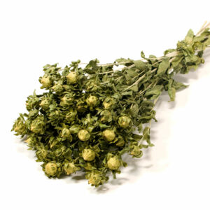 Carthamus, Natural Green Dried Flowers