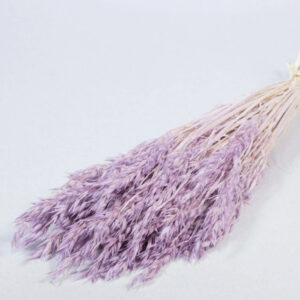 Oats Dried Bleached Lilac