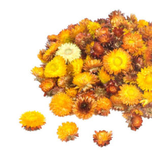 Helichrysum Dried Heads, Natural Orange