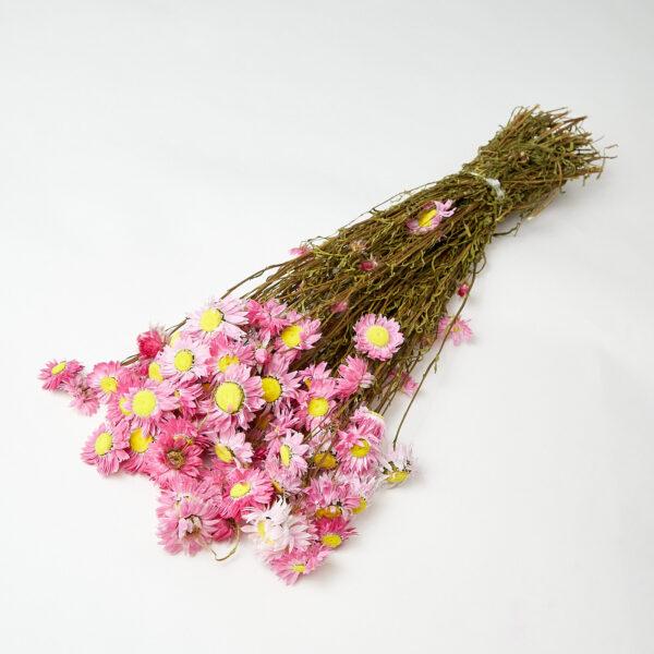 Acrolinium Pink