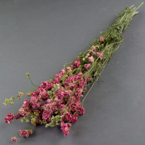 This image shows a bunch of dried, pink delphiniums, laid on a grey background