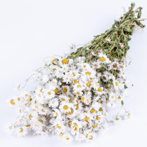 This image shows a bunch of white rodanthe flowers laid on a white background