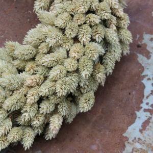 Phalaris Wreath 35cm Natural Dried