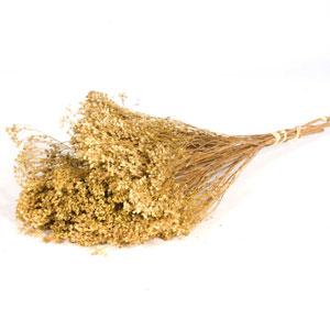 Dried Broom Bloom Natural