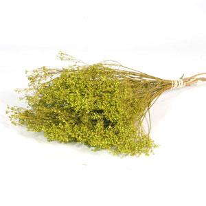 Dried Broom Bloom Green