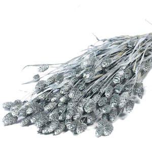 Dried Phalaris Grass Grey Wash