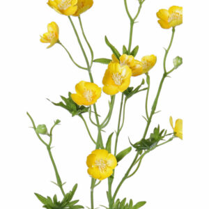 Faux Meadow Buttercup, Yellow