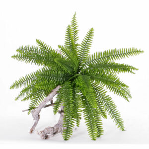Faux Varen Boston, Fern