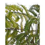Anthyrium fern