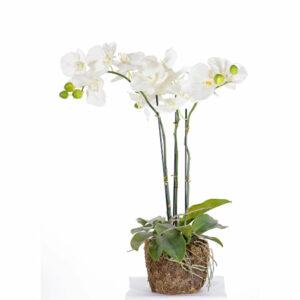 Faux Phalaenopsis Plant, White