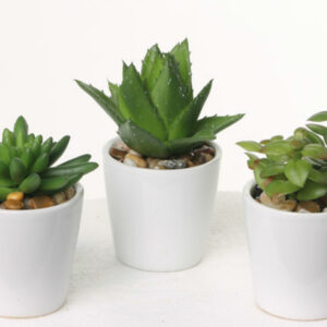 Faux Succulent Mix, set of 12